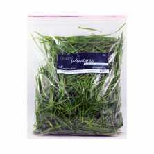 Wheatgrass - Clearance