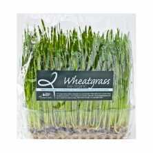 Wheatgrass Live