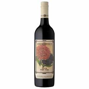 Pinot Noir 'Aster'