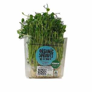 Snow Pea Sprouts Live