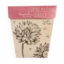 Everlasting Daisy<br>
